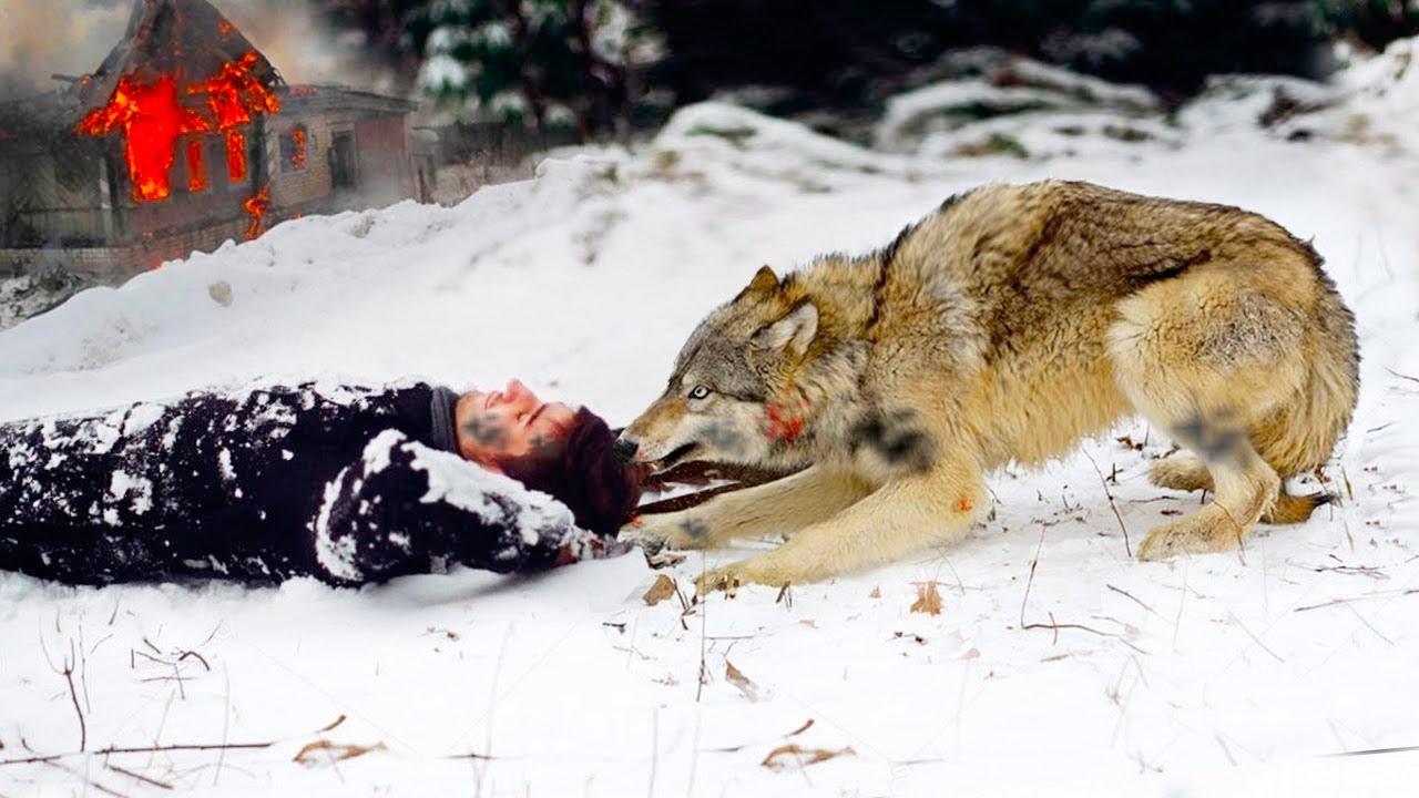أنقذ الذئب الرجل من النيران ، والطريقة التي فعل بها الامر أذهلت الجميع