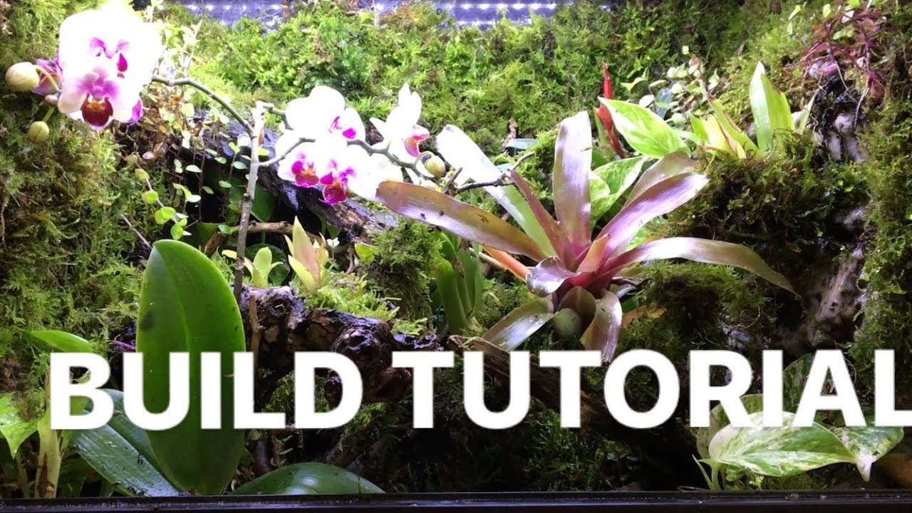 Dart Frog Terrarium Build Tutorial Moss Stream Pond Waterfall