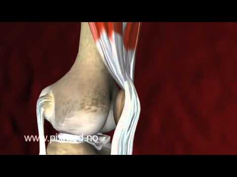 3d Vedio For Knee Joint Youtube