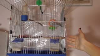 Клетка для попугая . Что должно быть в клетке !!