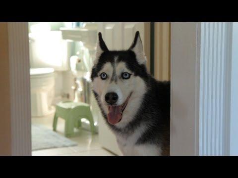 Dog Pulls Hilarious Prank on Owner