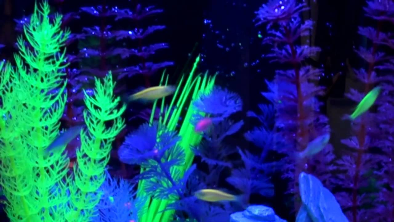 Fish Tank Wallpaper Hd Learn About The Glofish 174 Fluorescent Fish Experience Youtube