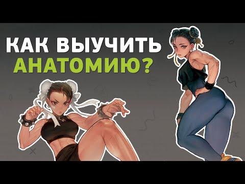 Как выучить анатомию?