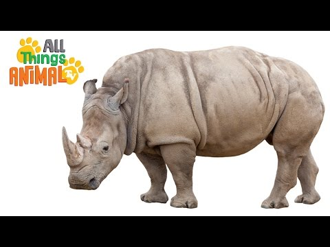 RHINO: Animals for children. Kids videos. Kindergarten | Preschool learning