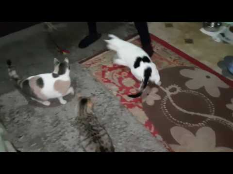Cats playing (Jan 2017)