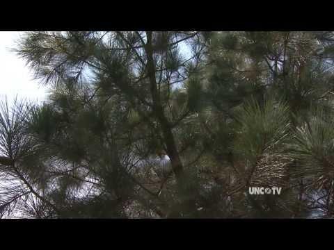 NC State Nursery - A Land Of 15 Million Trees