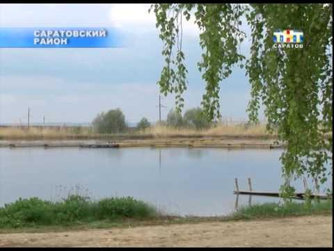 В Саратовской области на четверть увеличилось производство рыбы [ВИДЕО]