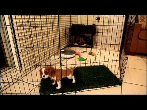 Long Term Confinement Area For Puppies By Urban Dog