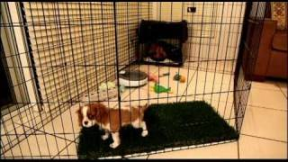 Long Term Confinement Area For Puppies By Urban Dog Training thumbnail