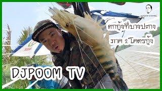 djpoom-tv-ออกล่าสัตว์ใหญ่กัน-โคตรกุ้ง-@บางปะกงกงกงกง