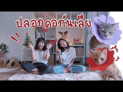 DIY คอลล่าร์ปลอกคอกันเลีย งบหลักสิบ ทำง่าย กันเลียได้น่ารักด้วย  ย้อมแมว ep.8
