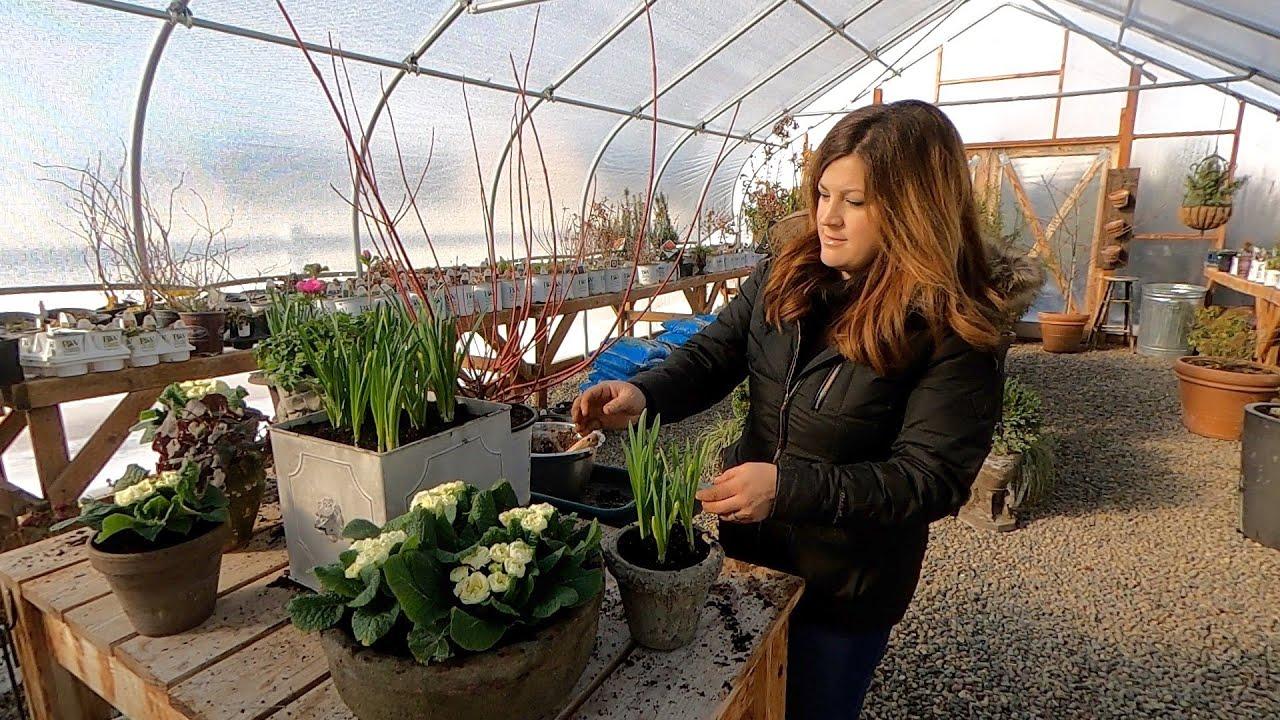 Spring Flowers + Potting Up Artichokes & Ornamental Kale! 🌿🌸 // Garden Answer