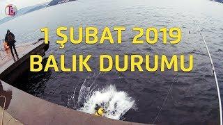 1 Şubat 2019 Boğazda Balık Durumu / İstanbul