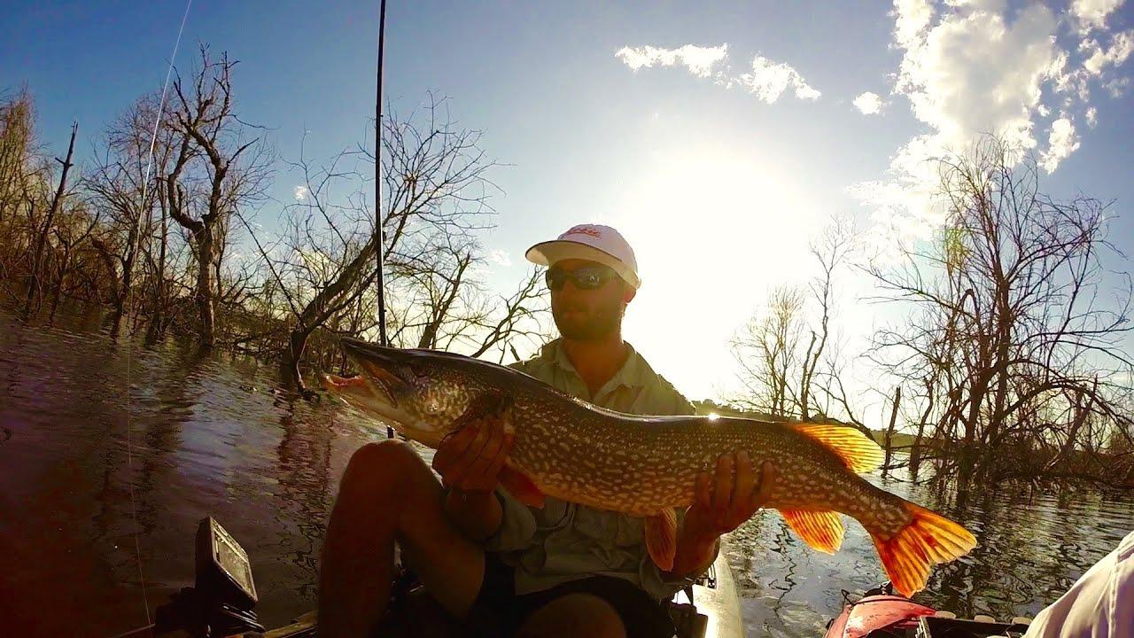 Nebraska pike fishing youtube for Nebraska fishing permit