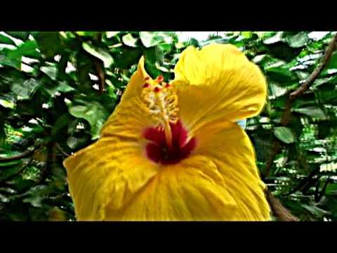 Medicinal plants of Jamaica