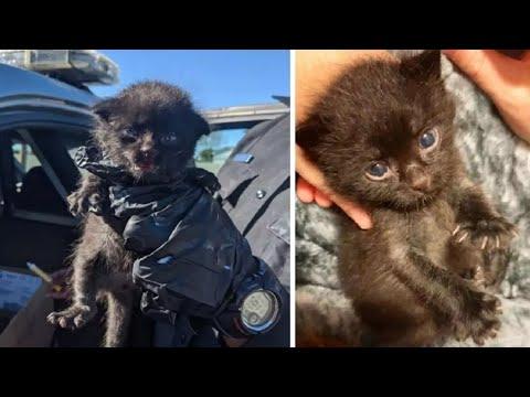 Вопрос: Считают ли кошки мамой хозяйку, которая их вырастила с детства?