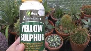 Sulphur powder on plants as a fungicide