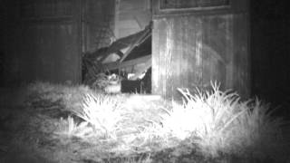 fox cub cam!