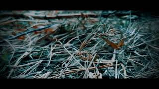 Cinematic Shot on Samsung A50 || SAMSUNG A50