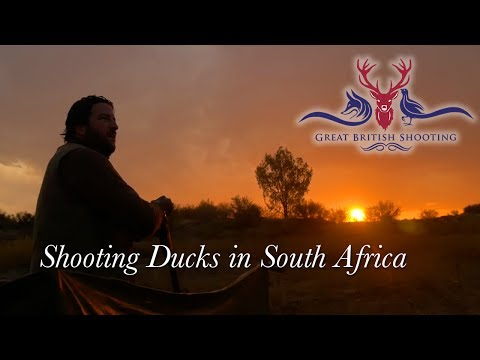 Shooting Ducks in South Africa