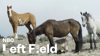 America's Wild Horse Population Is Skyrocketing, and Nobody Can Agree How to Fix It | NBC Left Field