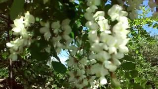 Весна #Календарная весна