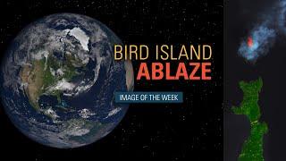 Bird Island Ablaze