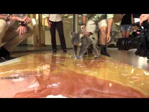 Melbourne artist donates $25,000 to Australia Zoo Wildlife Warriors