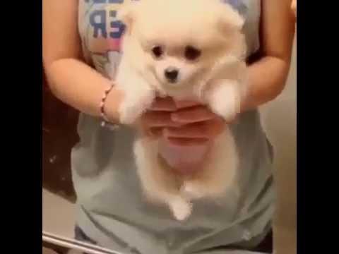 Air Swimming by a cute dog