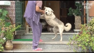 White Dog Keeps Pestering A Stranger To Raise Her | Kritter Klub