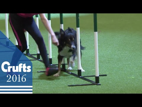 YKC Agility Dog of the Year | Crufts 2016