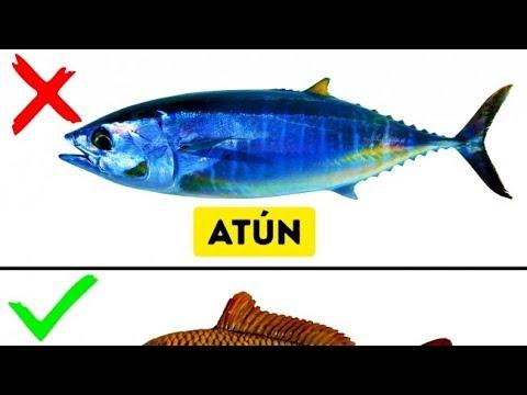 9 Tipos De Pescado Que No Deberías Comer