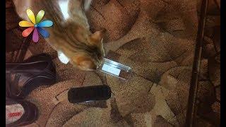 Как отучить кошку воровать вещи в доме – Все буде добре. Выпуск 1126 от 21.11.17