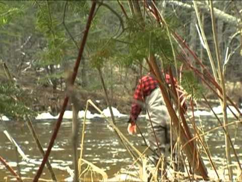 The Presidents River - Brule River