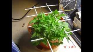 Pc Grow Box - From Seed To Harvest