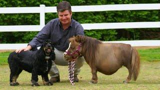 Ngựa Lùn Tí Hon chỉ cao 44cm và Những chú Ngựa Mini nhỏ bé nhất TG!