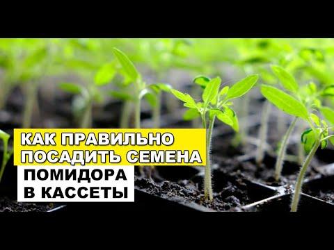 Посев семян томата в кассеты для рассады. Начало летне-осеннего сезона в теплице (21-06-2018)