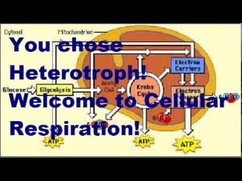 Heterotroph decision (Bio Project)