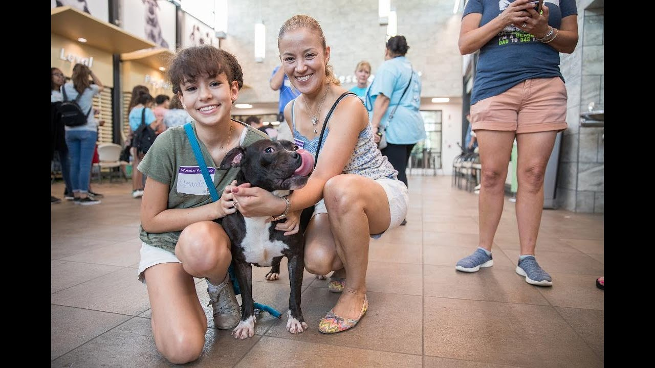 Broward shelter dogs go on a walk all at the same time