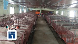 Bắc Giang: loay hoay với dịch tả lợn Châu Phi