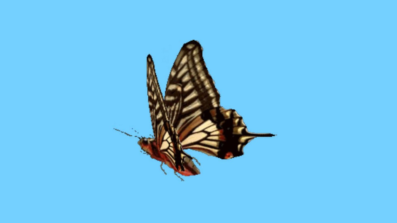 蝴蝶(威力導演/繪聲繪影)色度去背素材 - YouTube