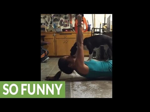 Mike Perry - Persistent Pup Joins Owner For Workout!