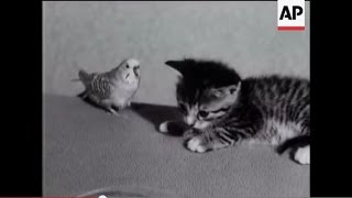 Happy Family of Kittens, Bird and Puppy - 1955