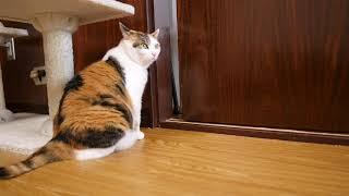日本語のアテレコ動画の猫コント、ハイクオリティすぎて二度見必至