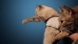 Реклама Лады с котами, пародия на рекламу Мерседес