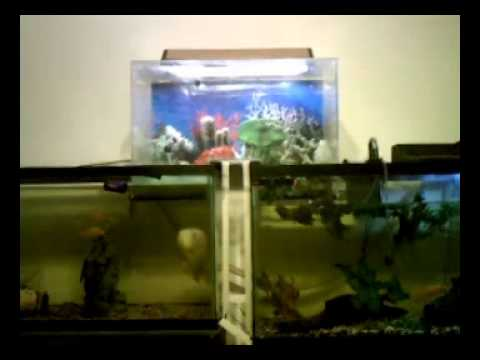 How to drain inverted fish tank part 2 removing aquarium for Inverted fish tank