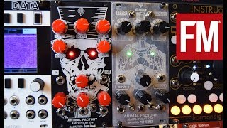 Modular Monthly: Tonal destruction from Animal Factory Amplification