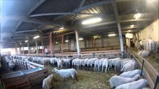 apres-midi à la ferme