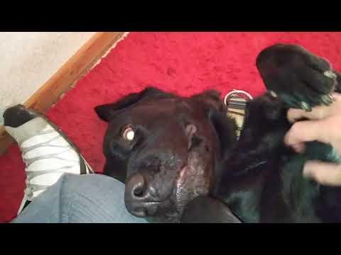Großer Hund = Große Nase :3