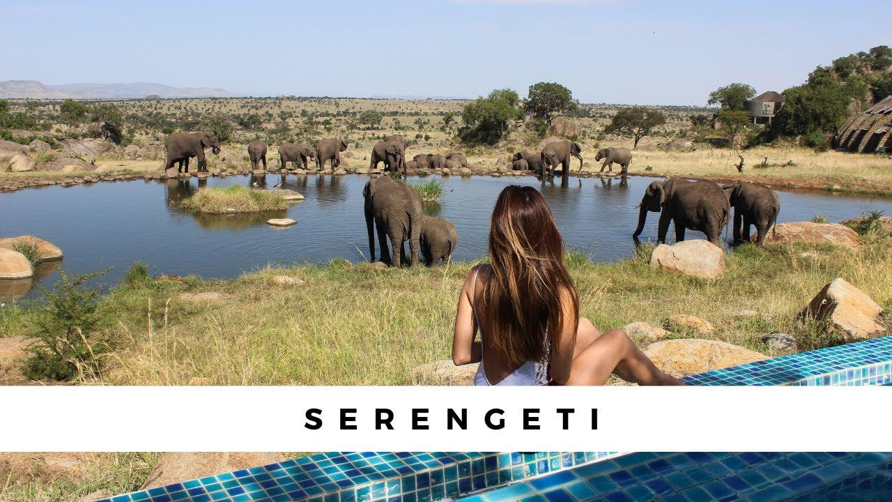 The Serengeti Four Seasons - An unforgettable Safari!